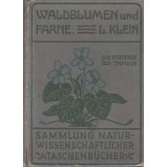 Waldblumen und farne, V - Ludwig Klein